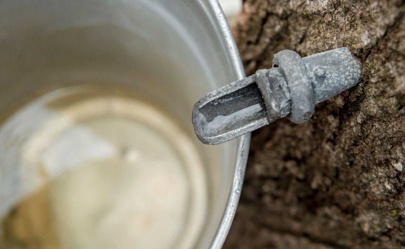 syrup running into a bucket near Killington